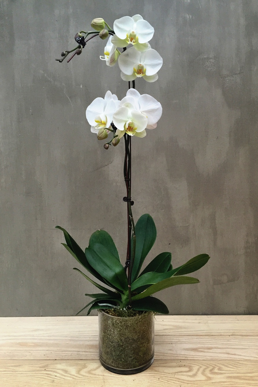 double_orchid_with_tube_vase_3