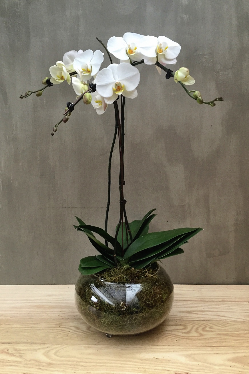 three_orchids_with_round_vase