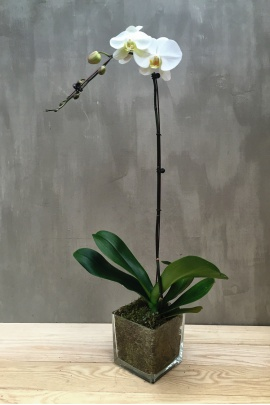 single_orchid_with_square_vase_3
